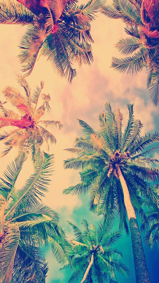 Nature Coconut Tree Sky iPhone se wallpaper