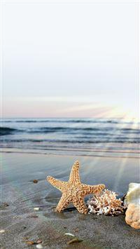5693 78 Sea Starfish On Sunlight Beach IPhone 5s Cse Wallpaper