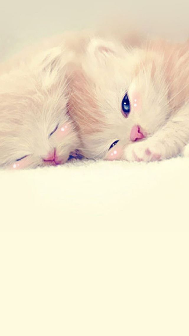 Sleeping Cute Kittens Lockscreen iPhone se wallpaper