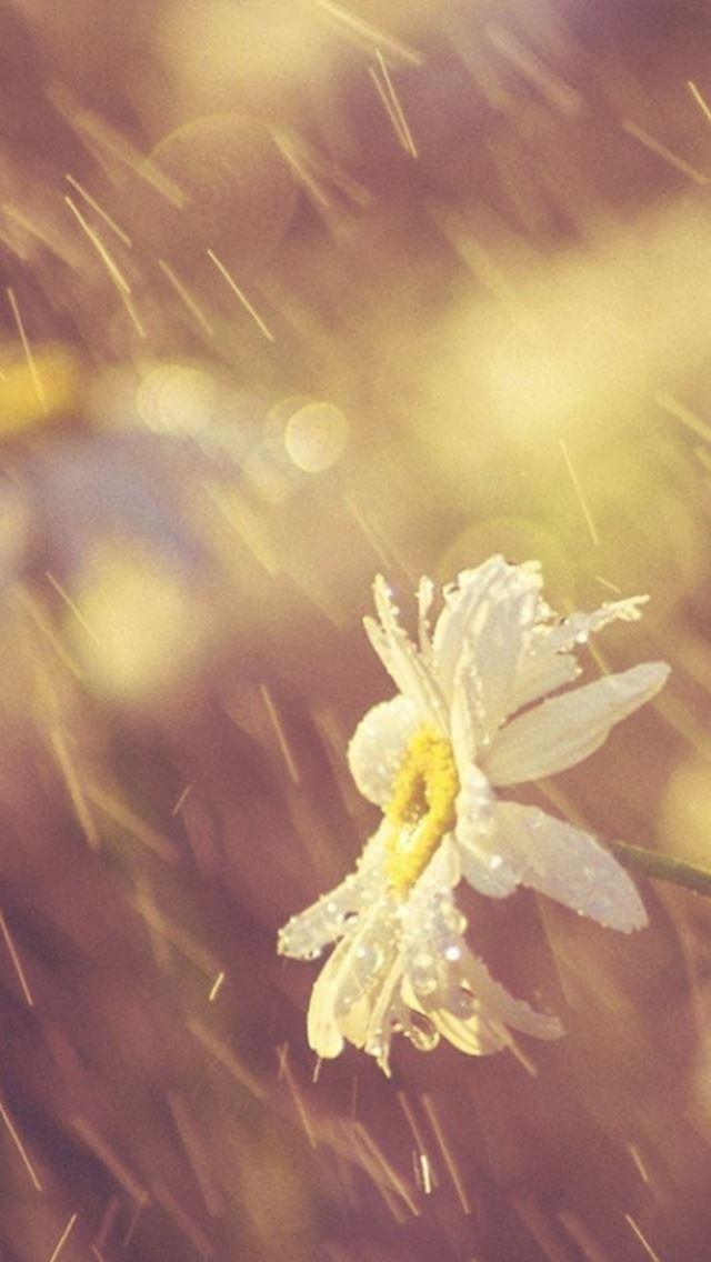 nature rainy dew bokeh white daisy iphone se wallpaper download