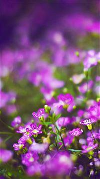 apple iphone purple flower wallpaper