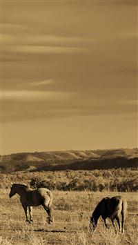 915 1 Grazing Horse Wild Grassland IPhone 5s Cse Wallpaper