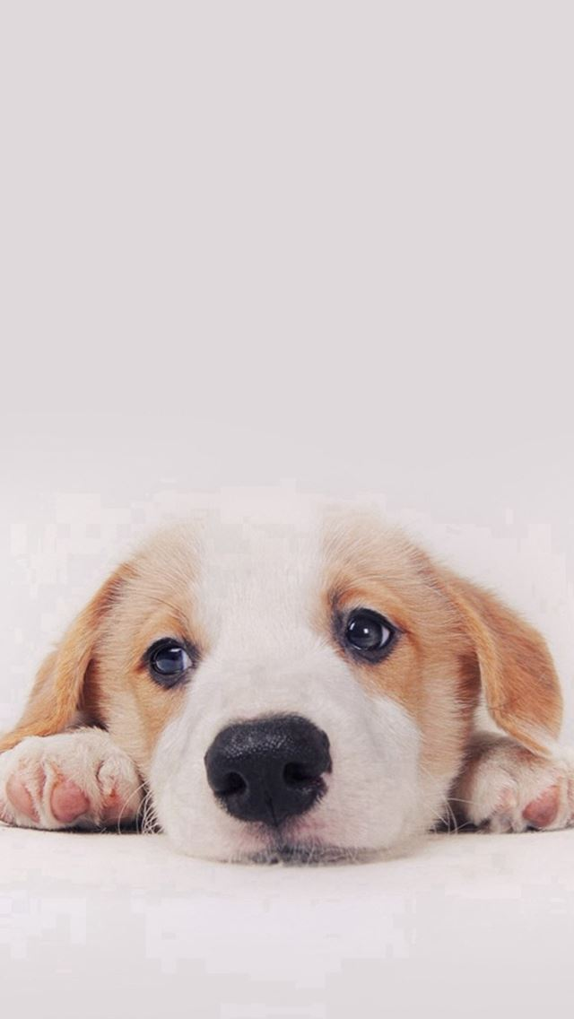 Cute Puppy Dog Pet Iphone Se Wallpaper Download Iphone Wallpapers