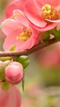 Flower Blossom Pink Branch Bright iPhone 5(s/c)~se wallpaper