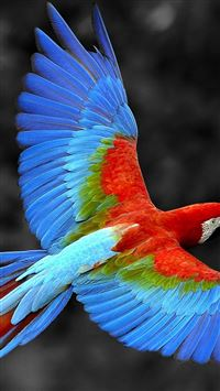 Brazil Parrot Colorful Feather iPhone 5(s/c)~se wallpaper
