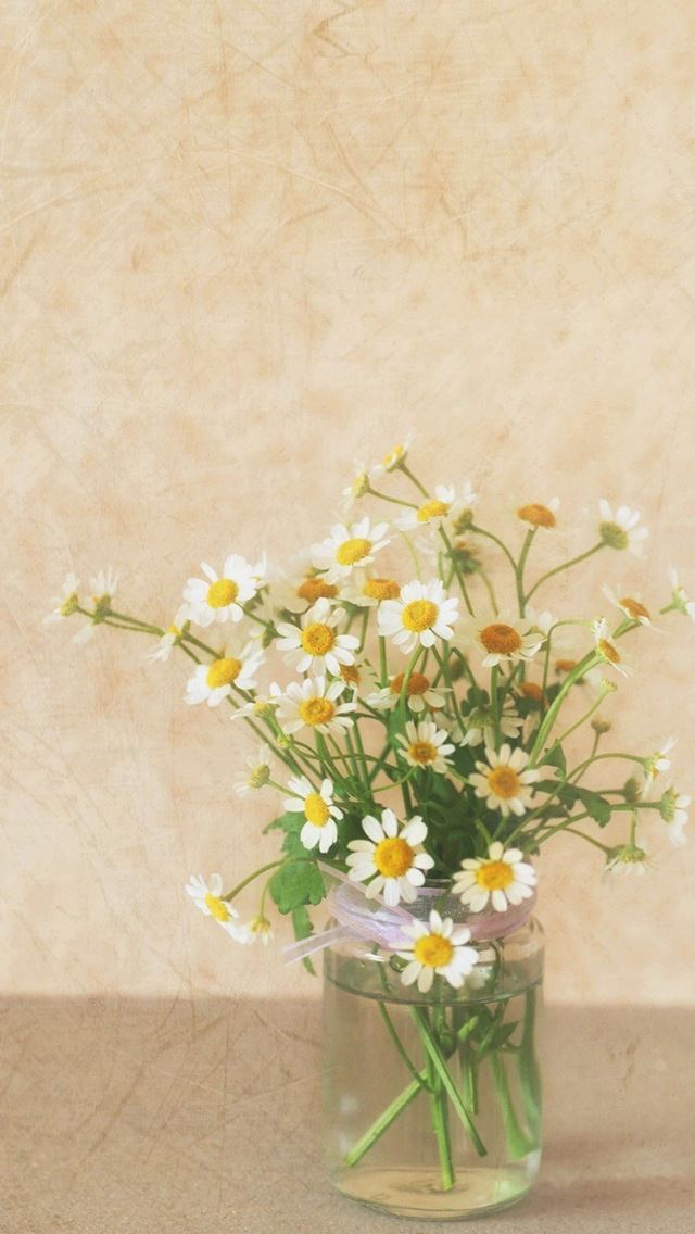 pure simple daisy flower water glass vase iphone se wallpaper
