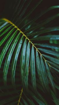 Palm Frond Leafy Branch iPhone 5(s/c)~se wallpaper