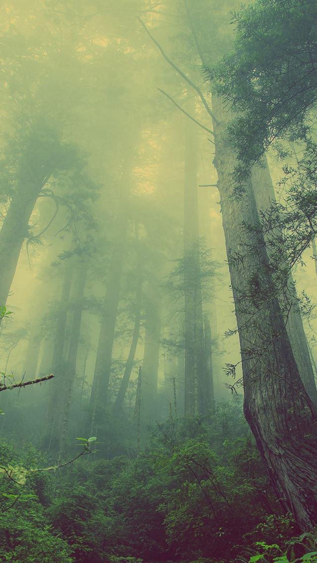 Green Forest Mist Fog Iphone Se Wallpaper Download Iphone
