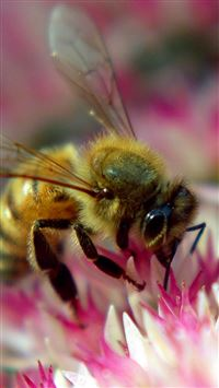 Flower Bee Pollination Insect iPhone 5(s/c)~se wallpaper