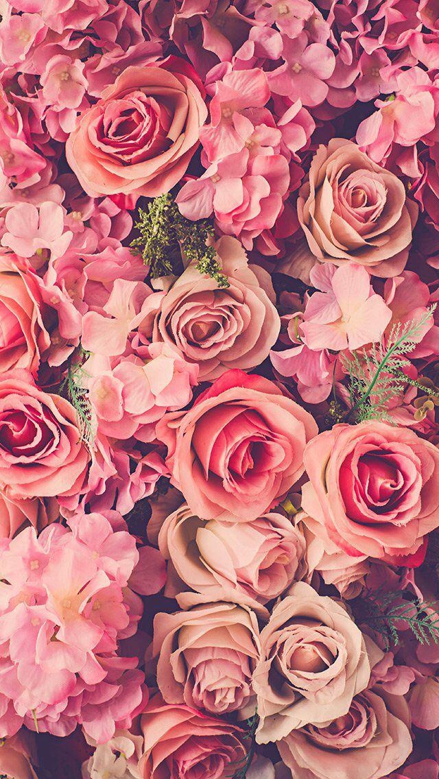 Pink Roses Bouquet Fresh iPhone se wallpaper