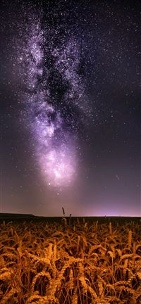 Milkyway over wheat field iPhone 5(s/c)~se wallpaper