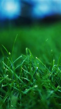 Grass Closeups iPhone 5(s/c)~se wallpaper