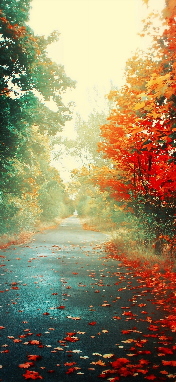 Trees Autumn IPhone Se Wallpaper