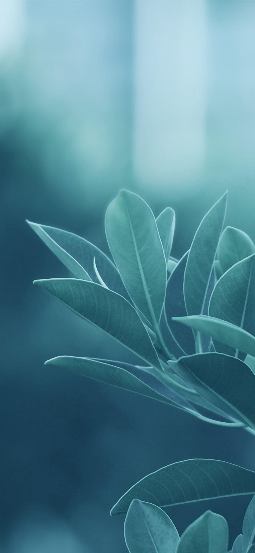 Green Leaves IPhone Se Wallpaper