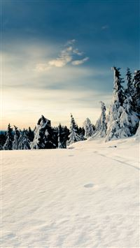 Snow Forest iPhone 5(s/c)~se wallpaper