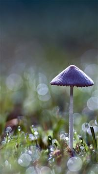 Mushroom bokeh iPhone 5(s/c)~se wallpaper