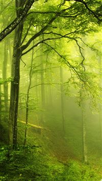 Beautiful green forest iPhone 5(s/c)~se wallpaper