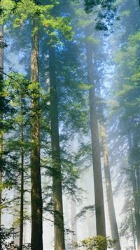 Redwood iPhone 5(s/c)~se wallpaper