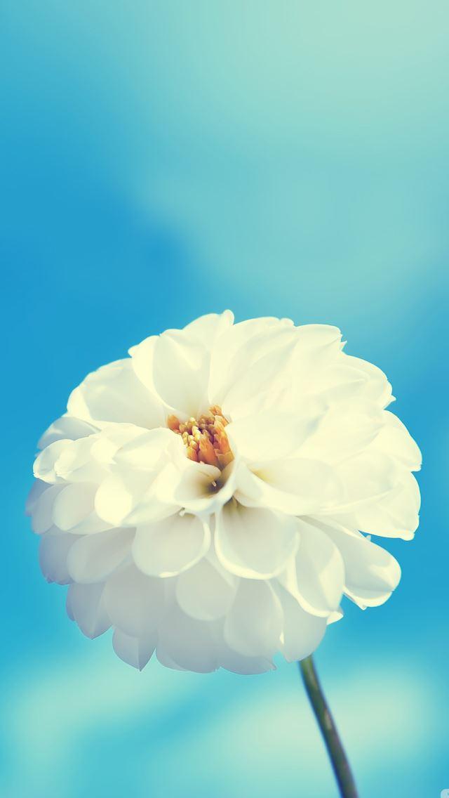 White flower iphone se wallpaper download iphone wallpapers ipad white flower iphone se wallpaper mightylinksfo