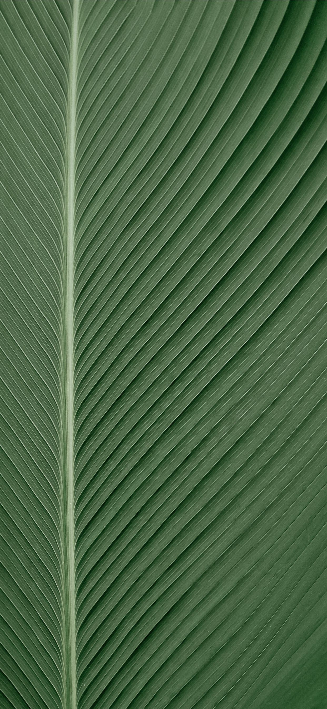 green and white striped textile iPhone SE wallpaper
