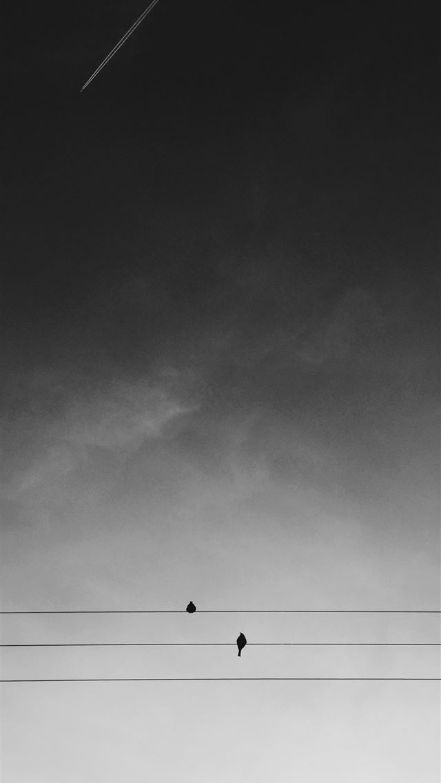 two black birds on electric wires under gray sky d... iPhone wallpaper
