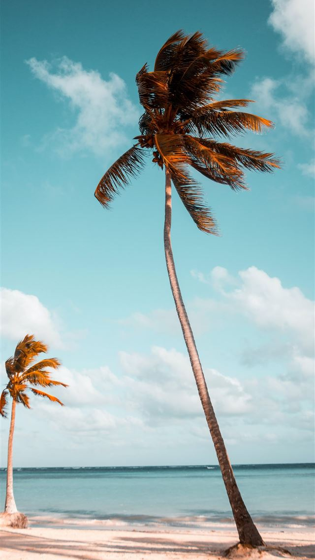 two coconut palm trees near shore under white clou... iPhone wallpaper