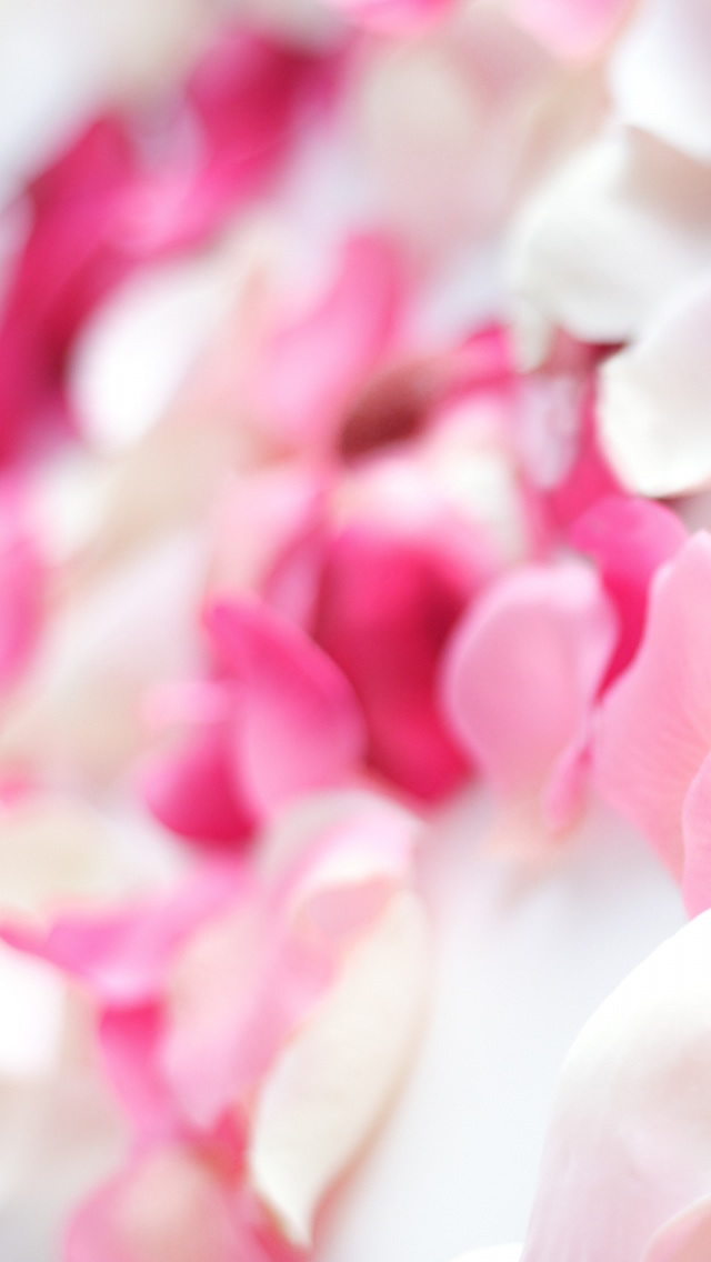 Pink Orchid Flowers Iphone Wallpapers Free Download