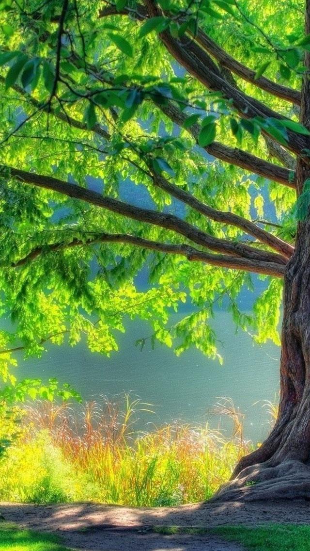 Summer Tree iPhone wallpaper