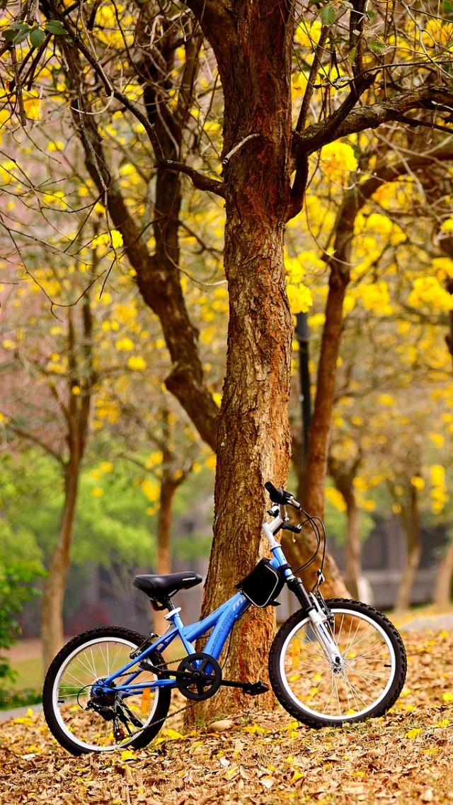 Bike In The Park iPhone wallpaper