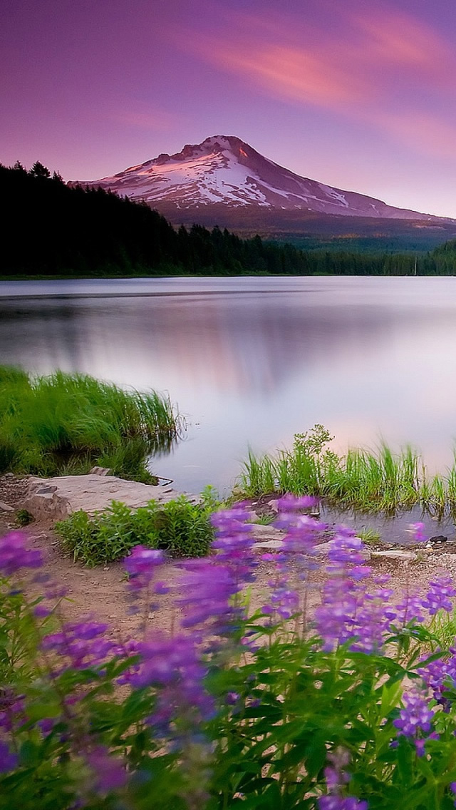 Mountain Lake And Flowers iPhone wallpaper