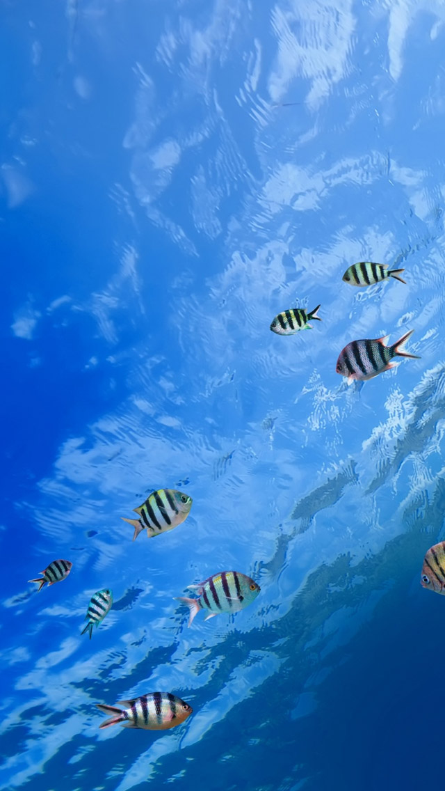 Underwater Tropical Fish Iphone Wallpapers Free Download