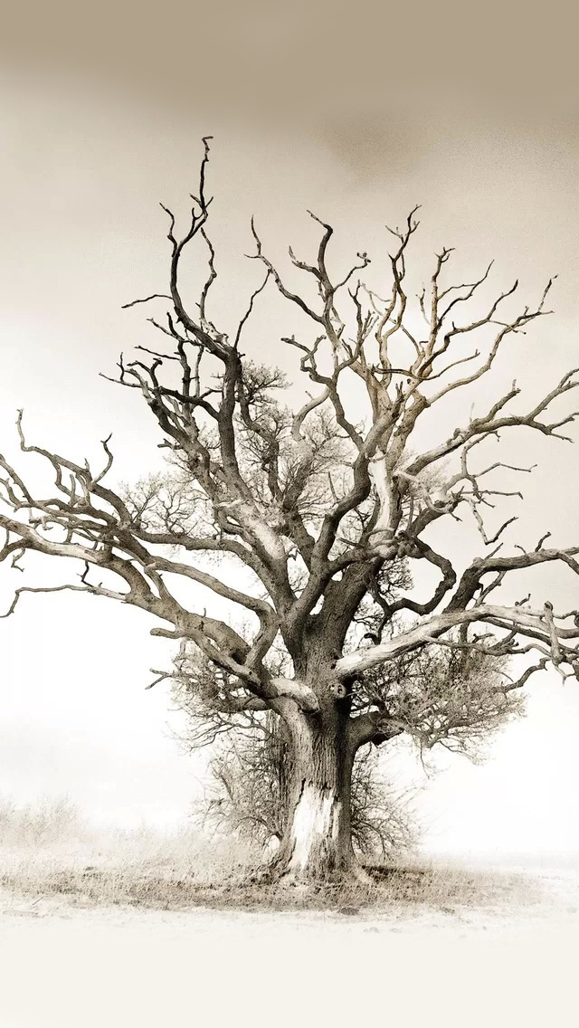 Withered iPhone wallpaper
