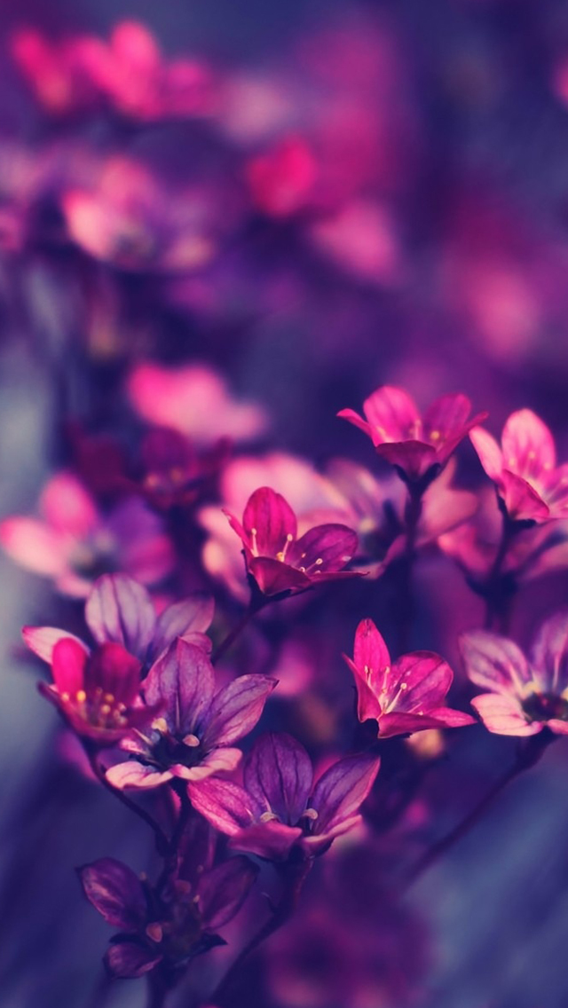 Purple wildflowers iPhone wallpaper