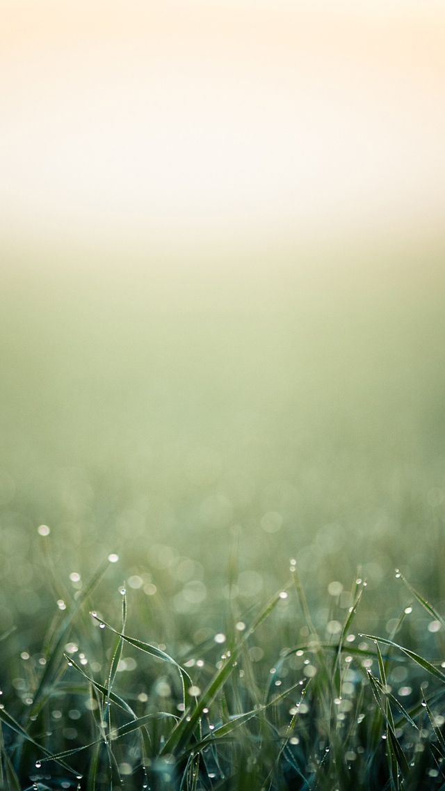 Blurred minimalistic grass iPhone wallpaper