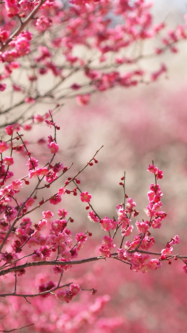 Spring Signs iPhone wallpaper