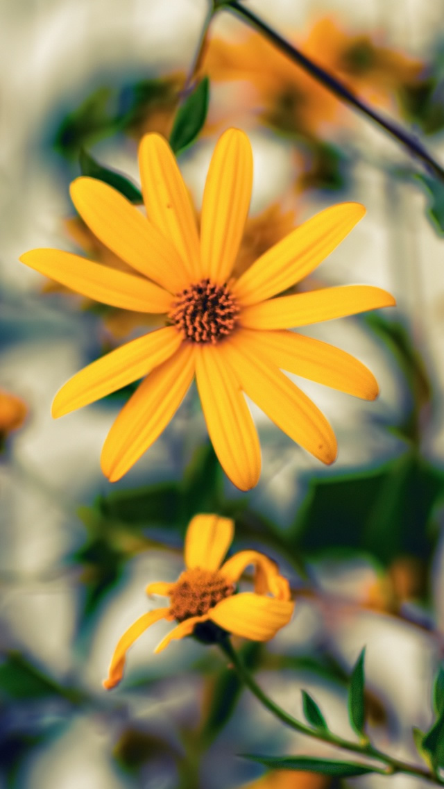Yellow Flower Iphone Wallpapers Free Download