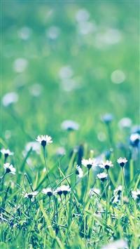 Daisies field iPhone 5s wallpaper