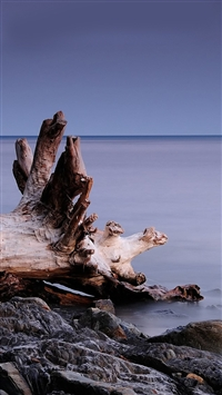 Beach roots iPhone 5s wallpaper