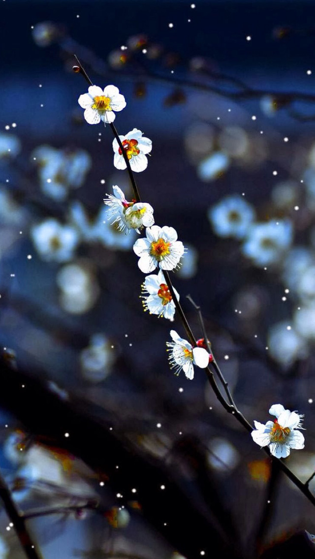 Plum blossom iPhone wallpaper
