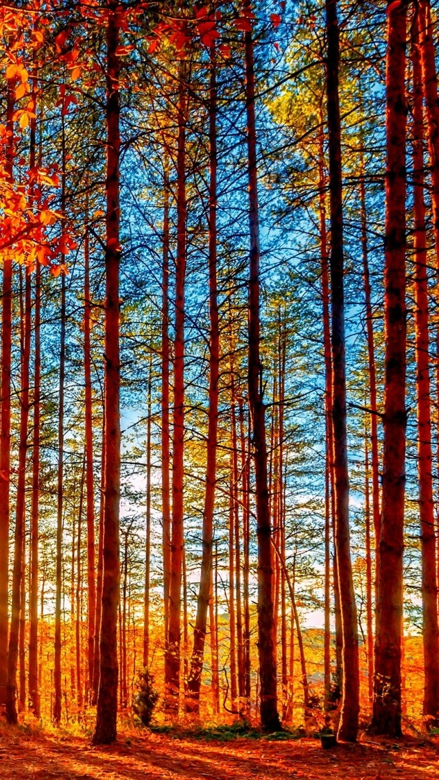 Autumn Forest Painting iPhone wallpaper