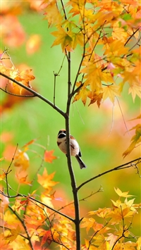 Little Cute Sparrow iPhone 5s wallpaper