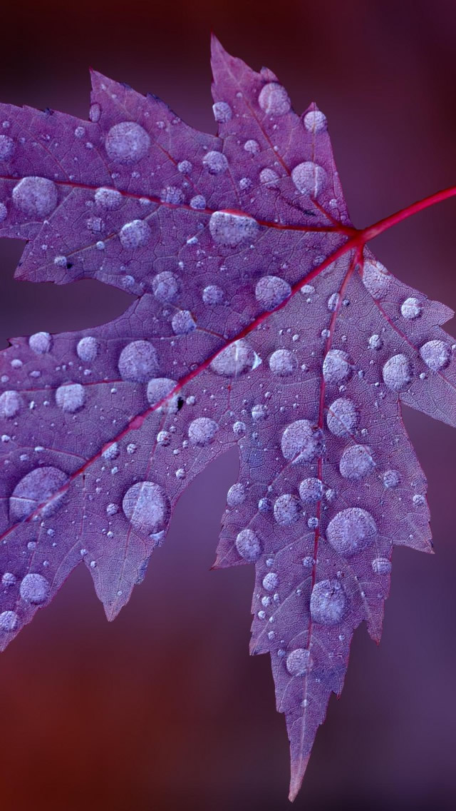 The Leaves After The Rain iPhone wallpaper