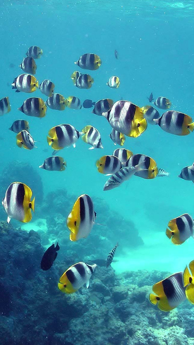 blue sea fish iPhone wallpaper