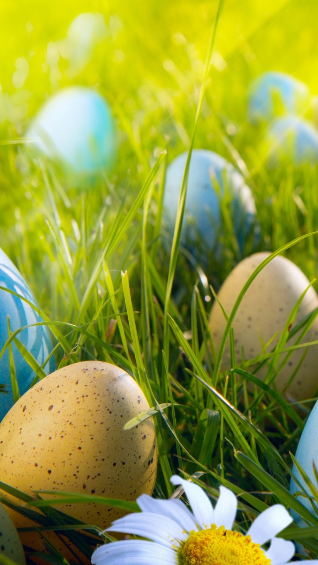 Easter Egg Hunt iPhone wallpaper