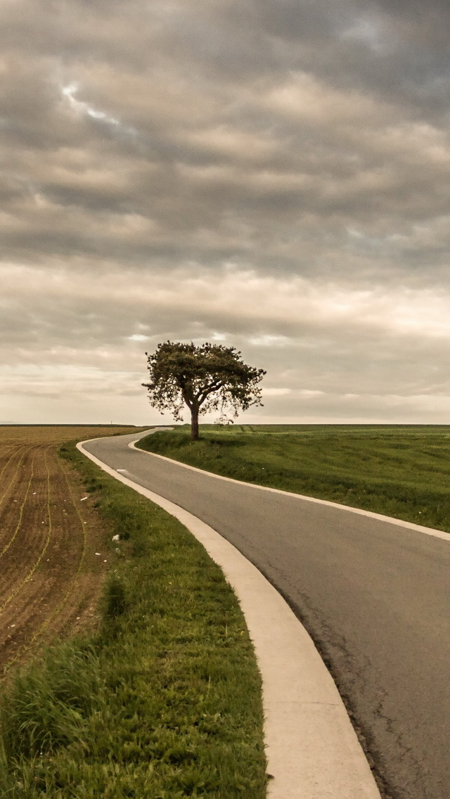 Roadside Tree Nature iPhone wallpaper