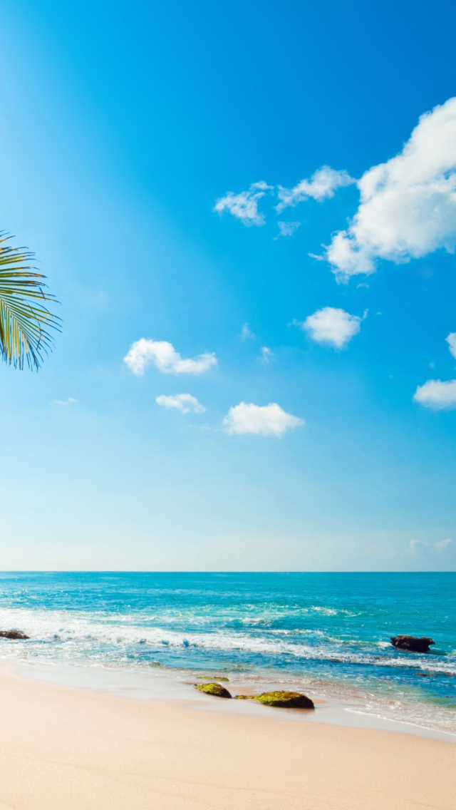 Tropical Sunshine iPhone wallpaper