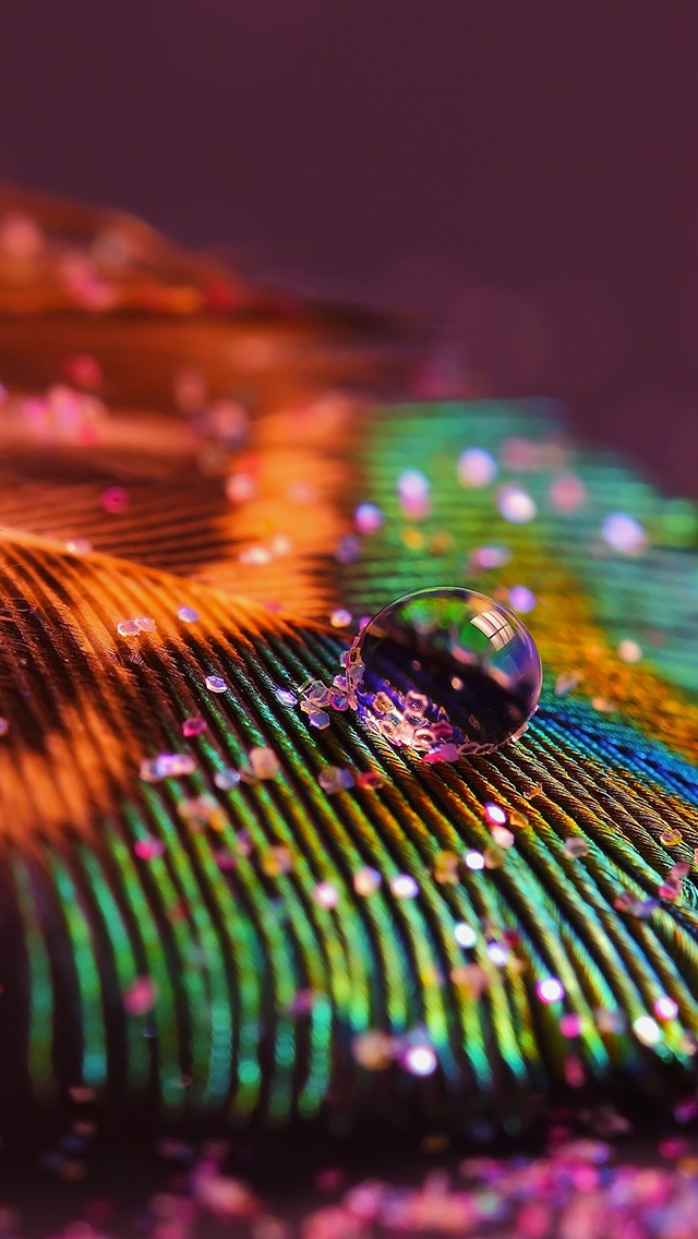Feather Glitter Macro Multicolor iPhone wallpaper
