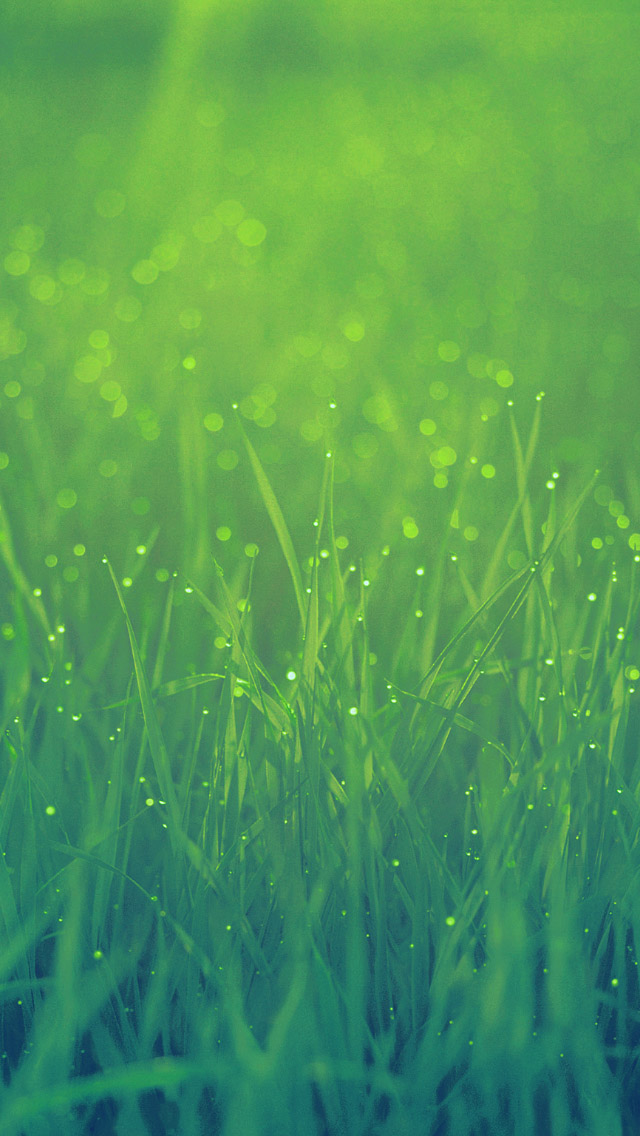 Green Grass In Morning Iphone Wallpapers Free Download