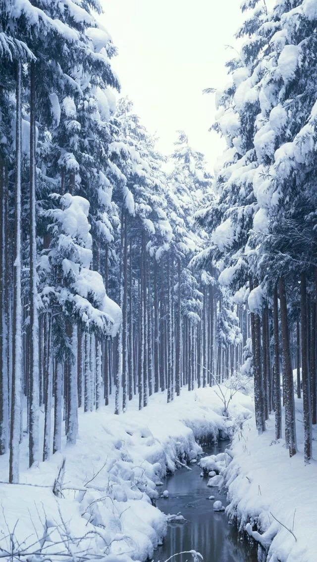 Snow covered forest iPhone wallpaper