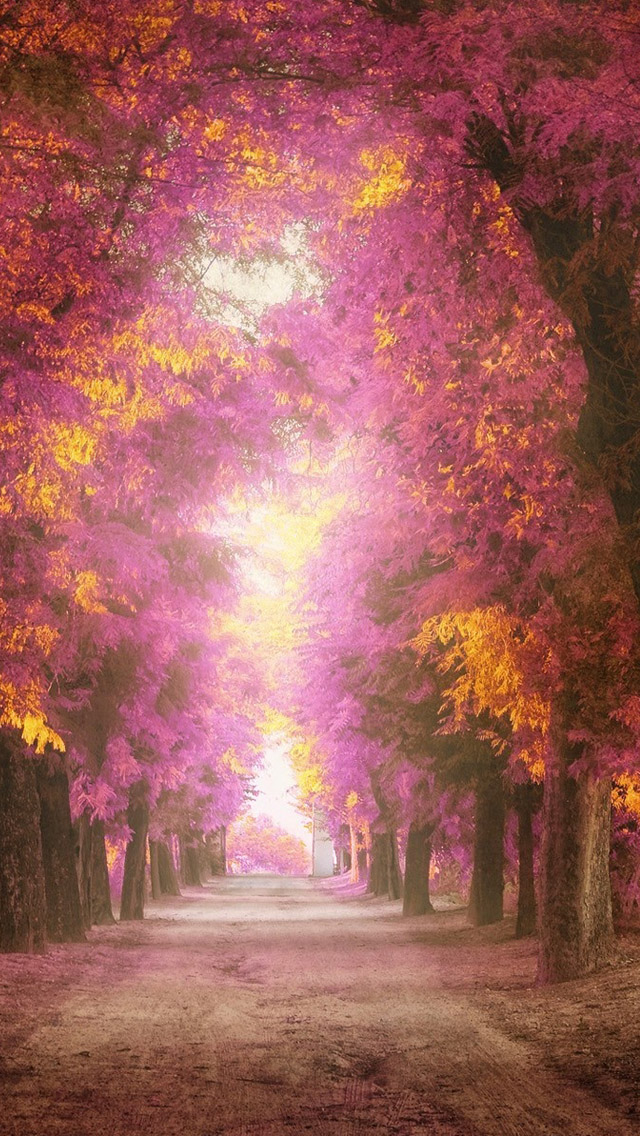Pink park iPhone wallpaper